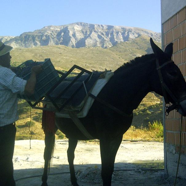 Antonio con el mulo Pancho