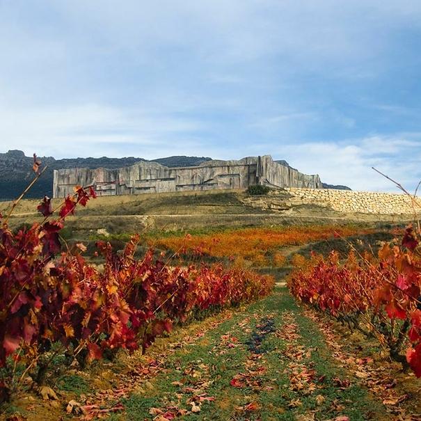 Viñedos de Torres en Rioja
