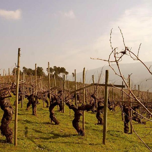 Viñas de Valdesil