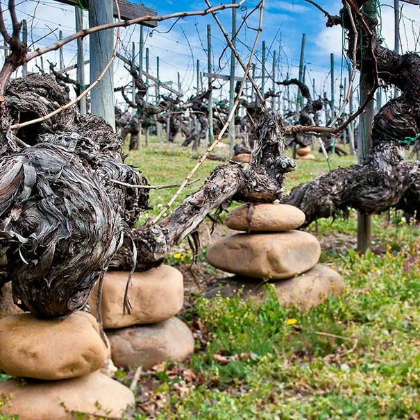 "Valdesil practica una viticultura denominada ""de equilibrio"""