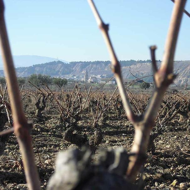 Vistas desde la viña La Dehesa
