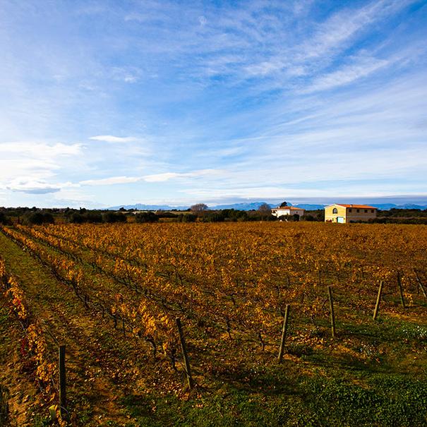 Vista general del viñedo de Vinyes del Terrer