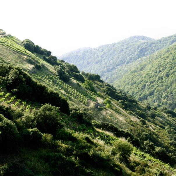 Las escarpadas laderas del Bierzo