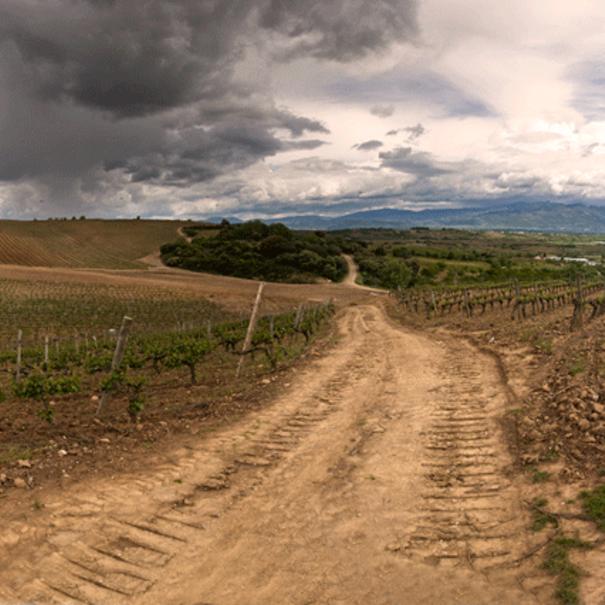 Camino en los viñedos de Beberide