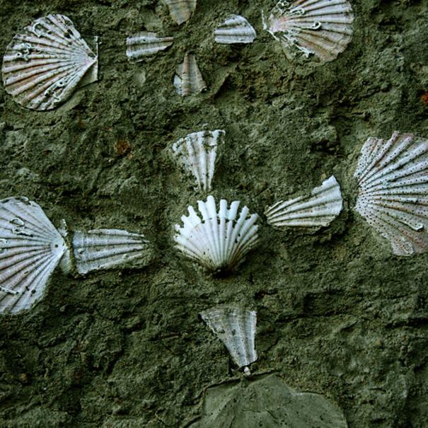 Conchas de Santiago