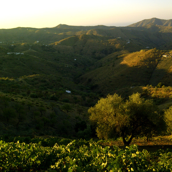 Vistas en los viñedos de Sedella