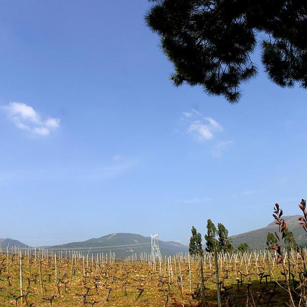 Panorámica de los viñedos