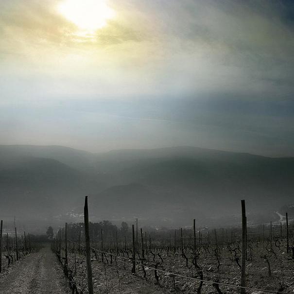 Panorámica de los viñedos de la región