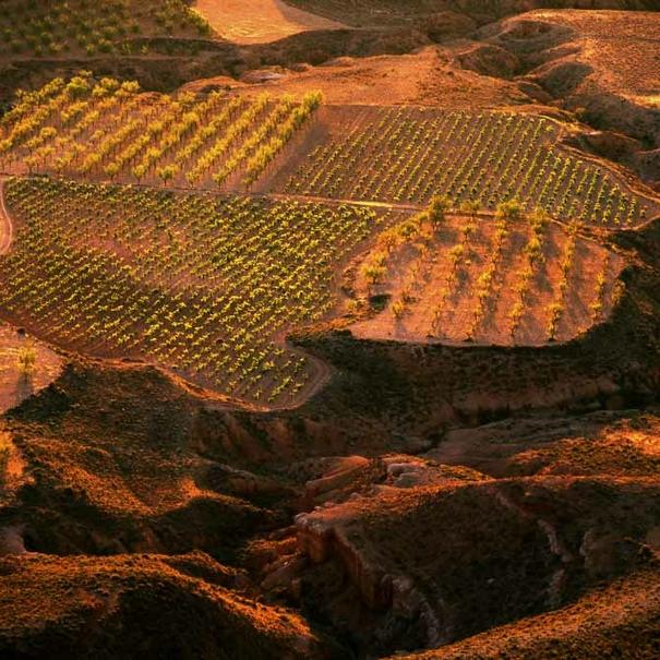 Panorámica viñedos