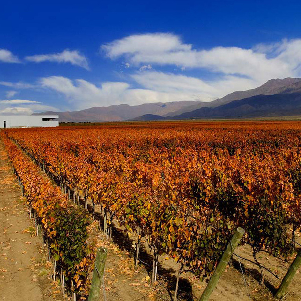 Uno de los viñedos de Clos de los Siete, en otoño