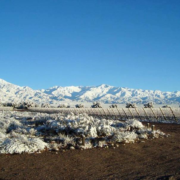 Vistas invernales del viñedo de Clos de los Siete, en Mendoza (Argentina)