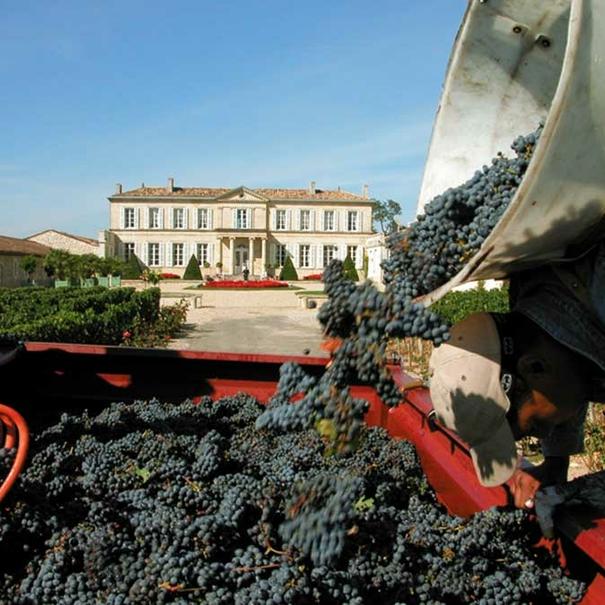 Traslado de las uvas durante la vendimia