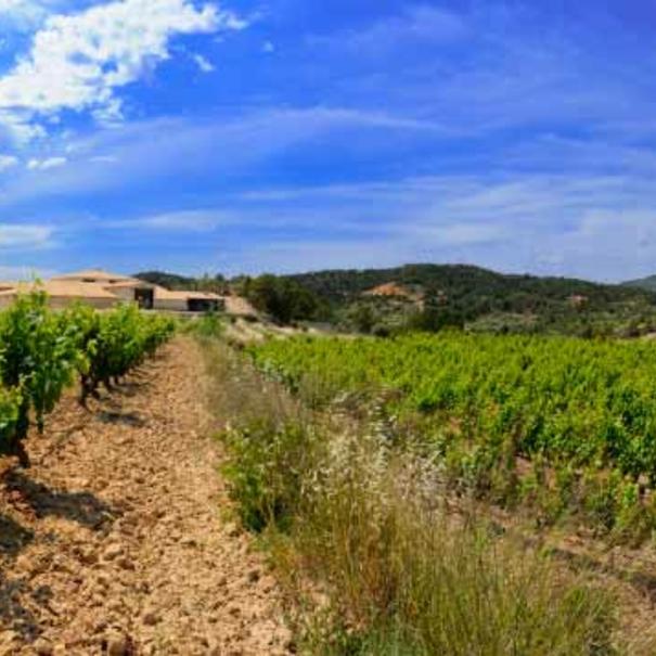 Panorámica de viñedos