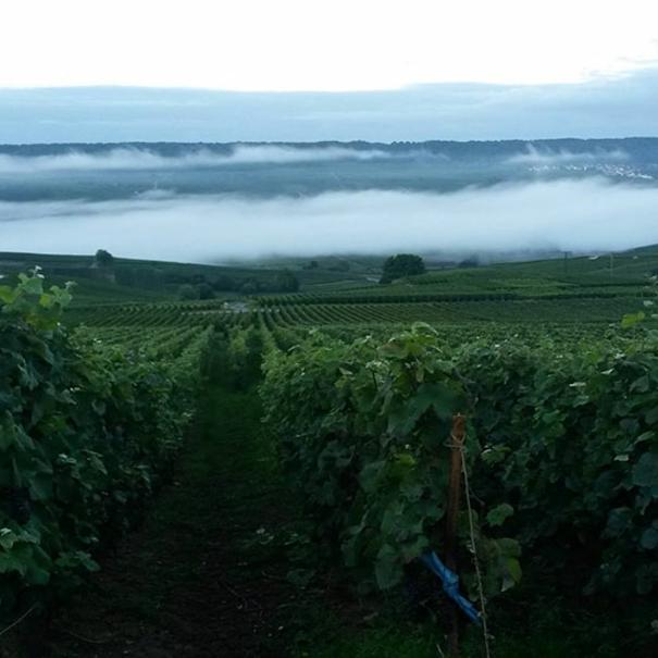 Vista de viñedos de la bodega Besserat de Bellefon