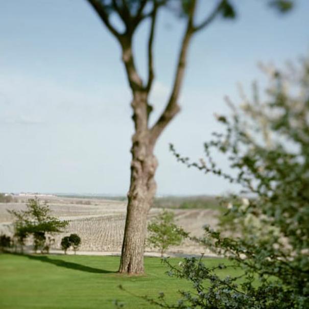 Árbol ubicado en la propiedad