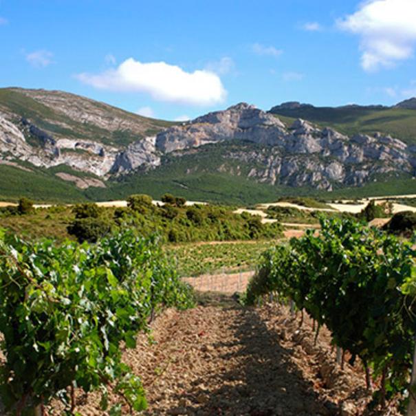 Viñedo a los pies de la Sierra de Cantabria