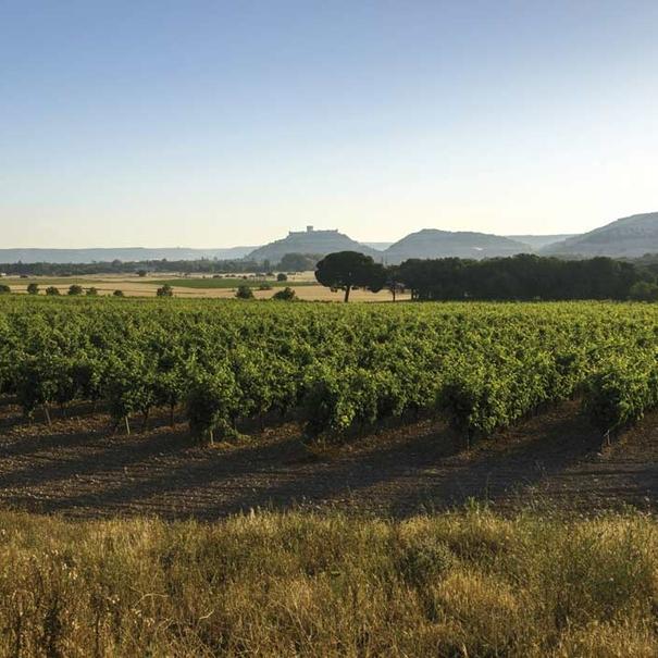 Vista general del entorno del viñedo de Pago del Cielo