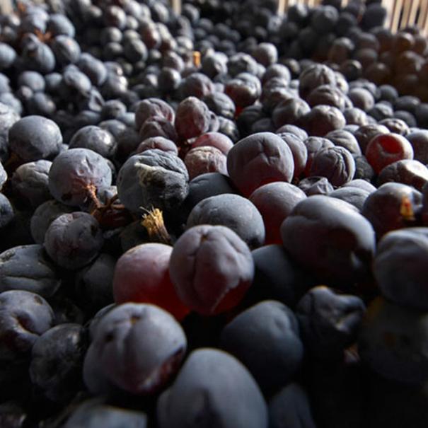 Uvas con las que se elabora el vino Amarone