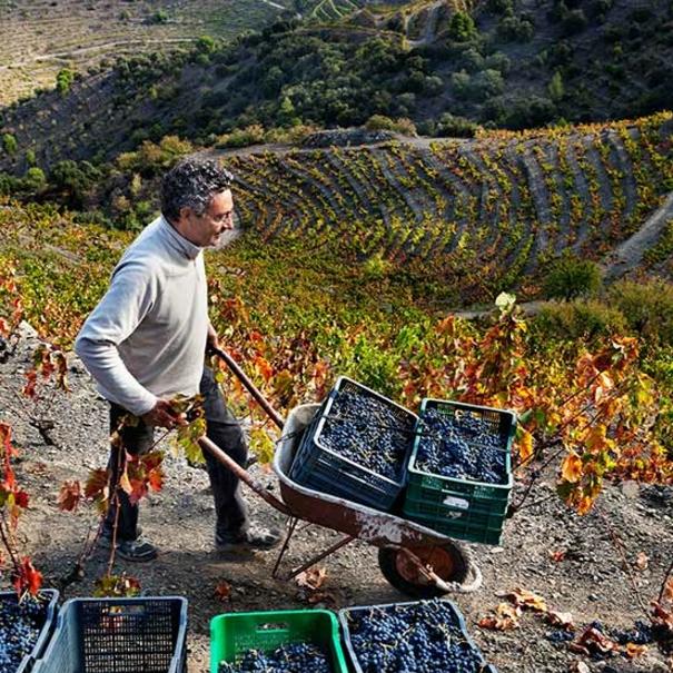 Raimon en el viñedo