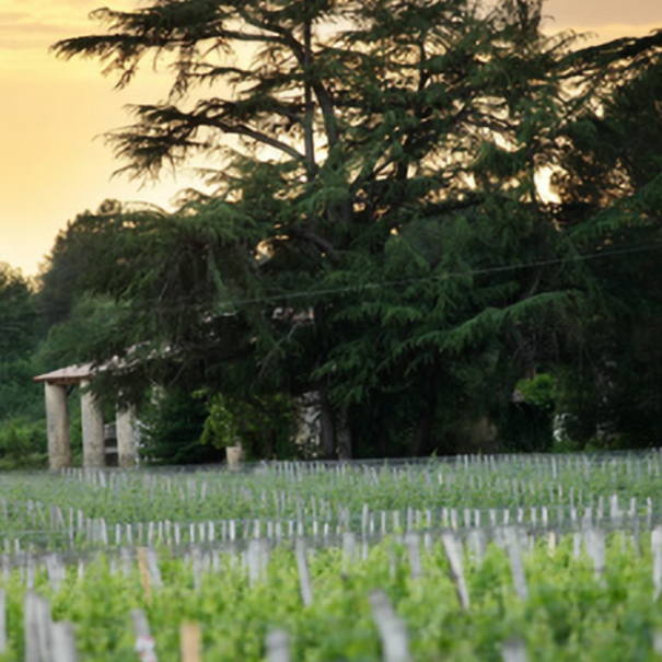 Anochece en Château Haura