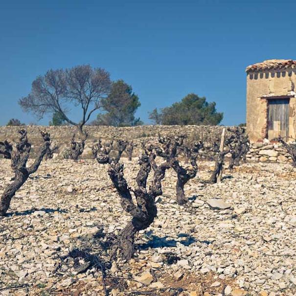 Saint-Chinian (Languedoc)