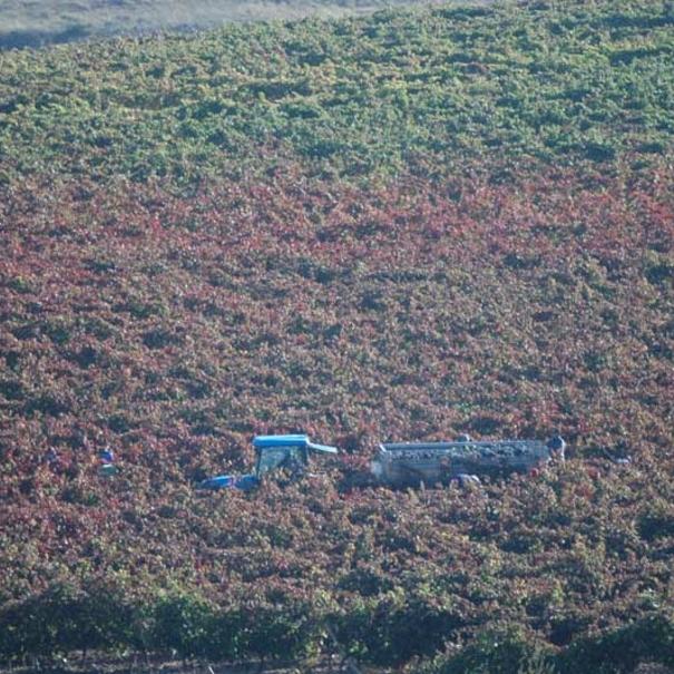 Tractor en los viñedos