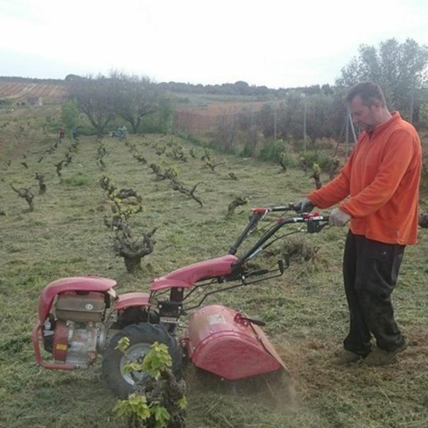Labores en el viñedo