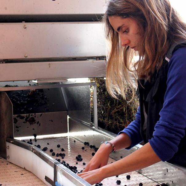 Martina en la selección de la uva