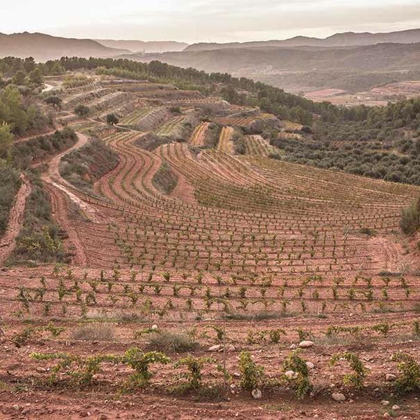 Panorámica de viñas y olivos