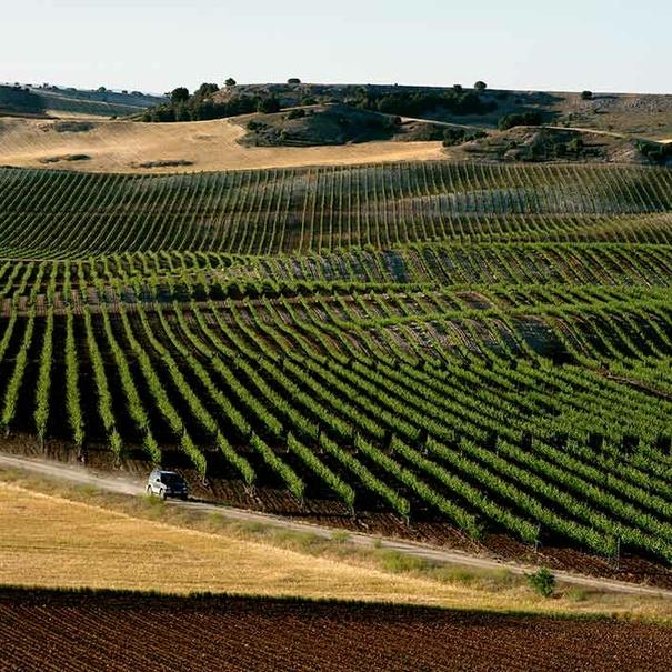 Entorno de viñedos