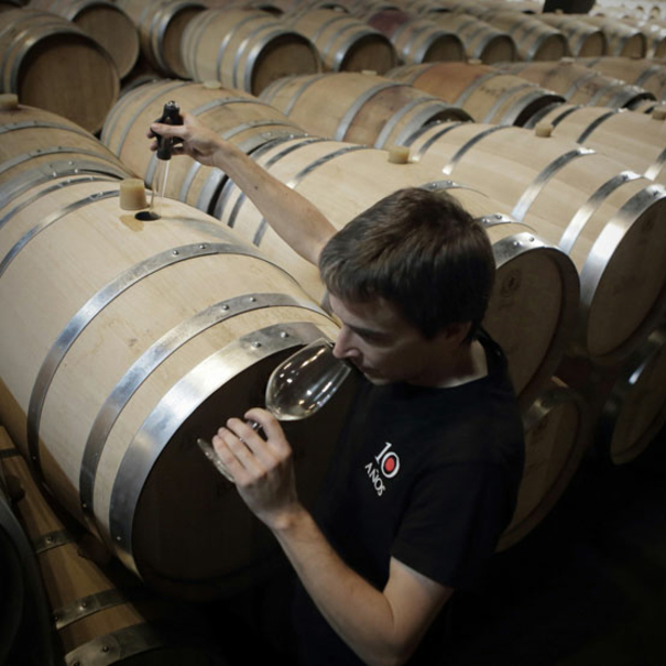 Cata del vino en rama