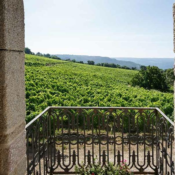 Vistas al viñedo
