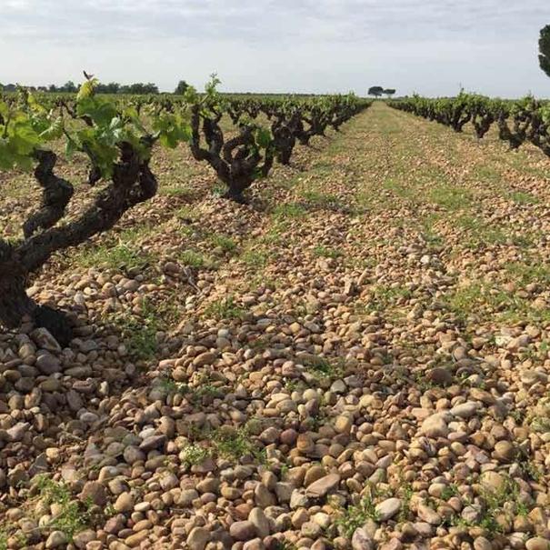Bodegas y viñedos Ponce
