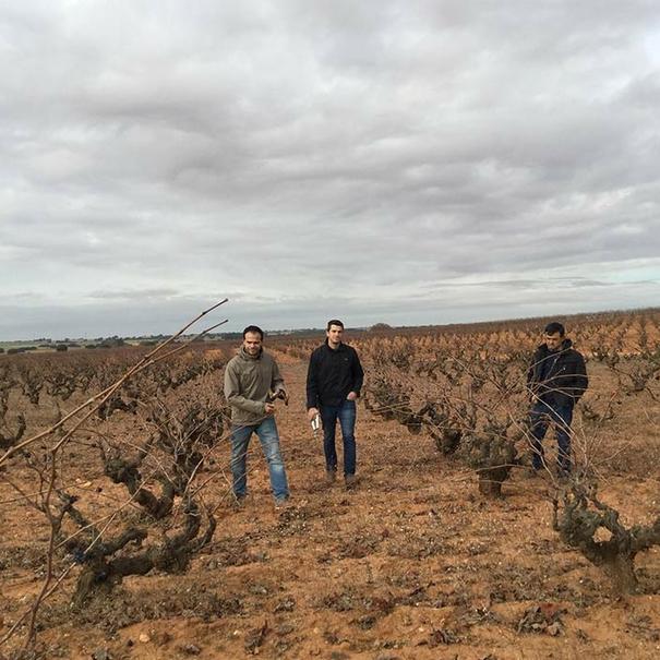 Viticultores de Manchuela