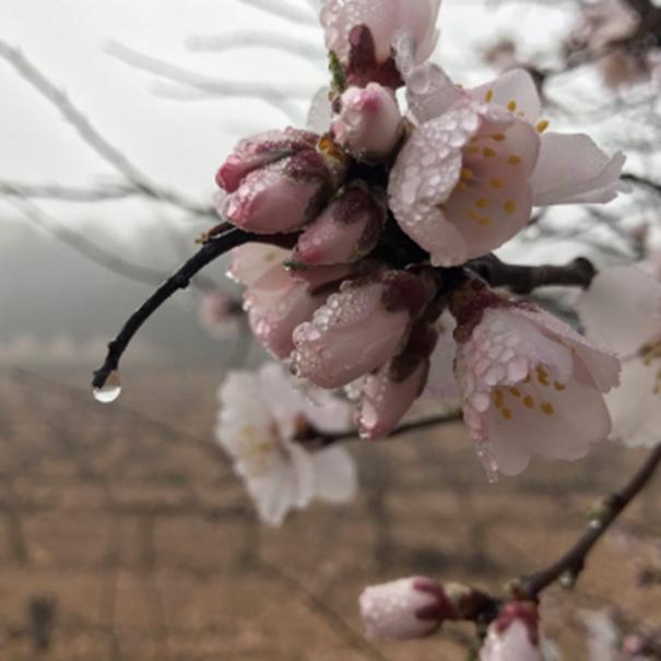 Viñas en primavera
