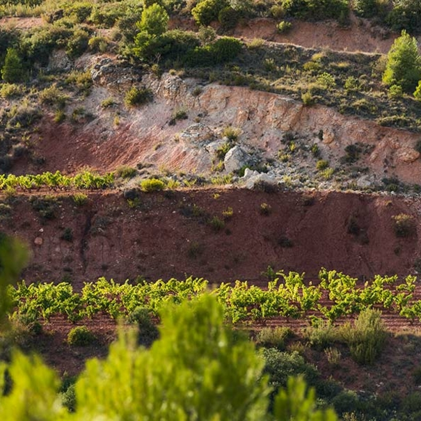 Terroir típico Priorat
