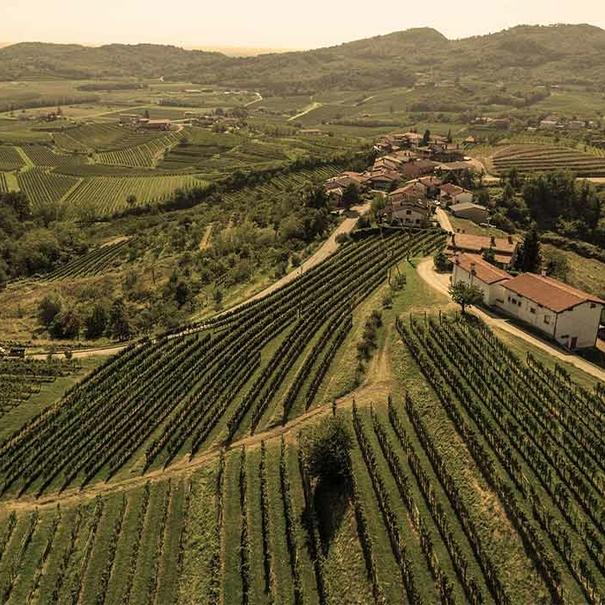 Vista aérea de las viñas