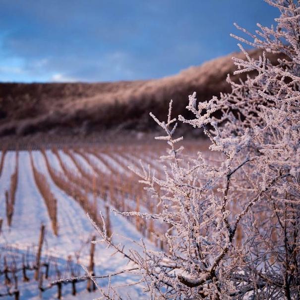 Invierno en las viñas