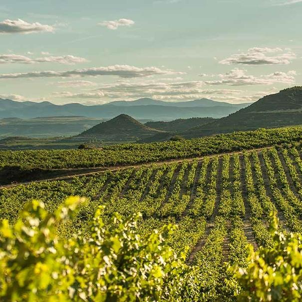 Viñas de Valserrano