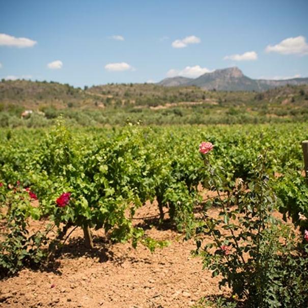 Rosales y viñedos