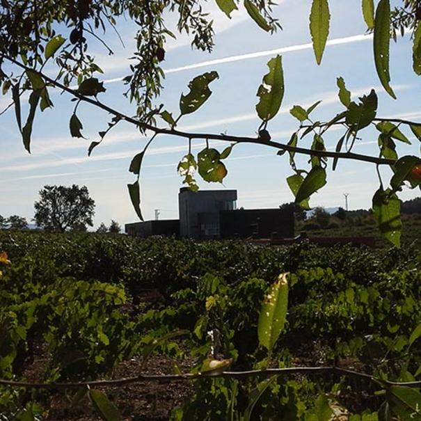 Entorno de la bodega y viñas