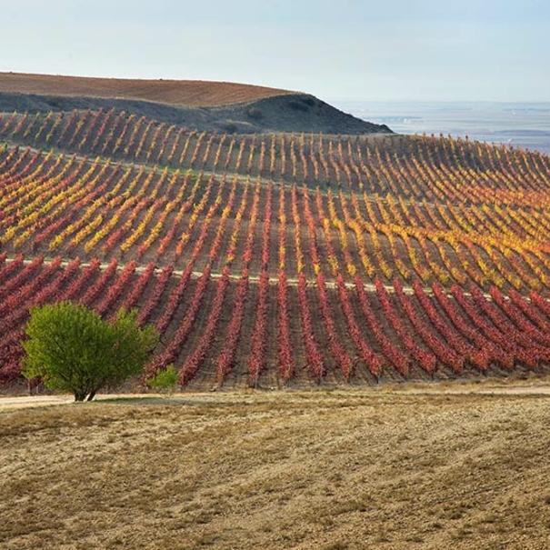 Caserío de Dueñas en otoño