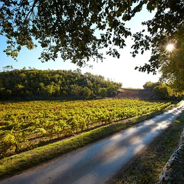 Un rincón del viñedo de Miraval
