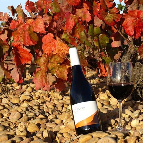 Botella de Duna en el viñedo