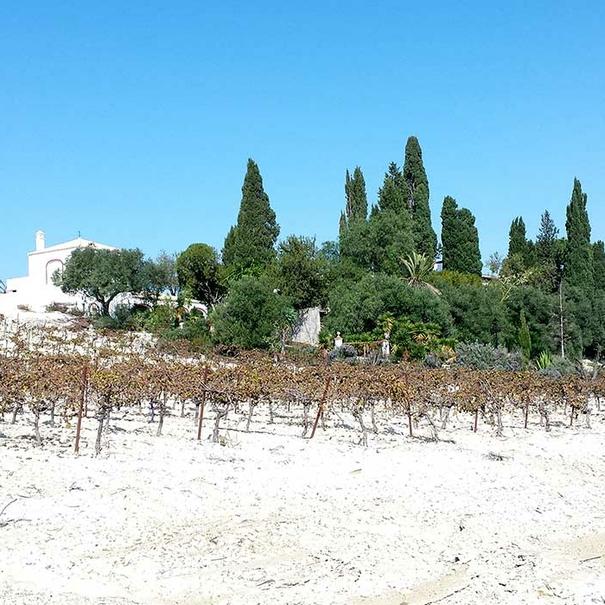 Viñas Pago Macharnudo