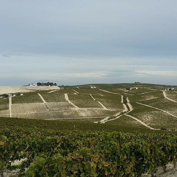 Paisaje de viñas