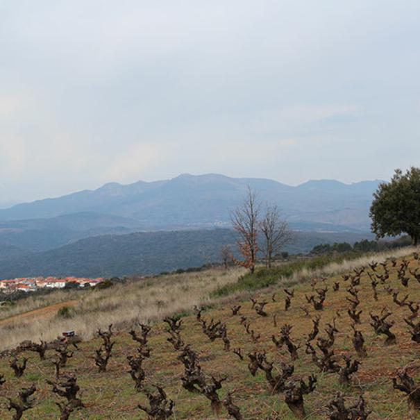 Entorno con viñedos