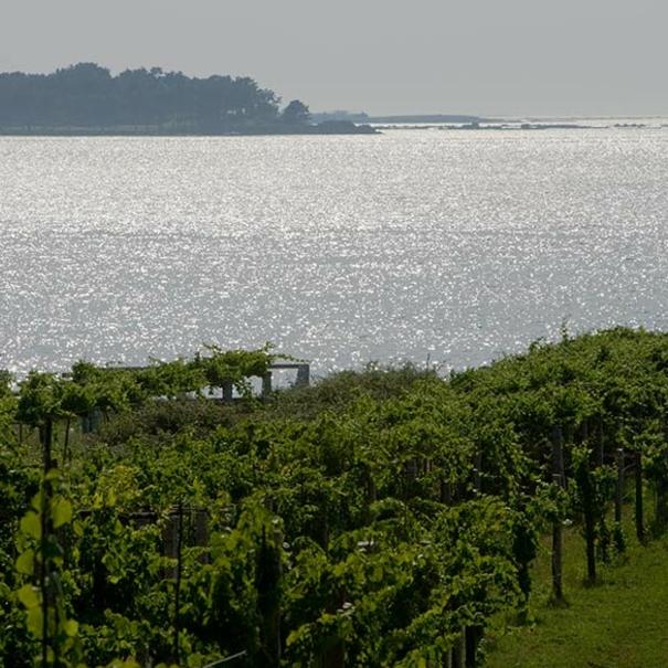 Panorámica de viñedos y el mar