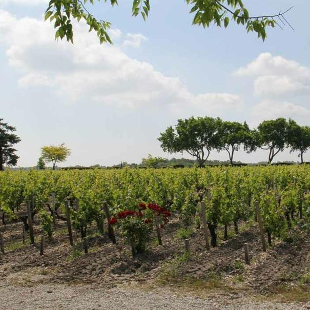 Panorámica de viñedos en Moulis