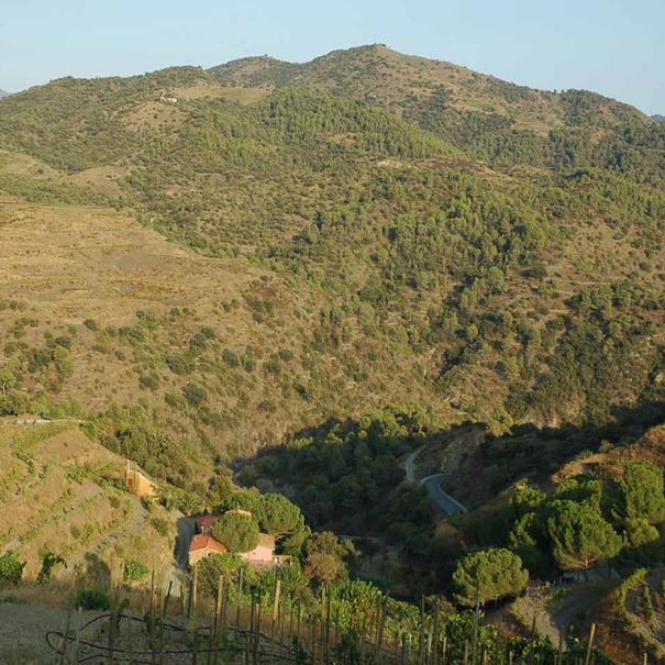 Algunas de las viñas se encuentran en plena montaña